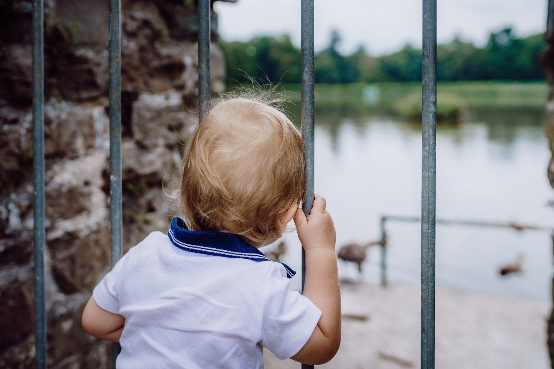 kleines Kind beobachtet Gänse durch einen Zaun